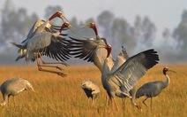 Nhảy múa giữa bầy chim