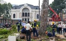 Người Sài Gòn tiếc nuối vì hàng cây cổ thụ bị đốn