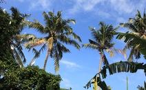 Petulu: đất lành chim đậu