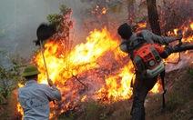 Rừng thông Nam Đàn vẫn cháy rừng rực