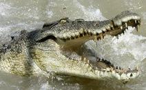 Kinh hoàng cá sấu 4,5m tấn công người câu cá