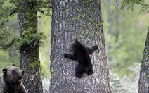 Gấu mẹ dạy gấu con trong tình yêu thương