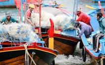 Ngư dân Khánh Hòa được mùa, được giá cá nục