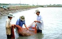 Trà Vinh thu hoạch gần 30.000 tấn tôm, người nuôi lãi khá