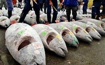 Các nước cắt giảm 50% hoạt động đánh bắt cá ngừ con