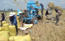 Nông dân Kiên Giang mừng vì lúa, tôm sú nguyên liệu được giá