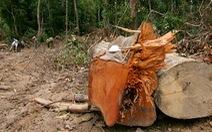 """Công an Đắk Lắk nói """"VTV dàn dựng phóng sự phá rừng"""""""