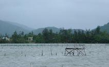 Tháo dỡ các điểm nuôi hàu gây ô nhiễm tại Lăng Cô