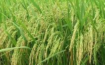 Giảm phát thải khí nhà kính trong nông nghiệp