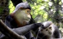 Chú trọng bảo tồn động thực vật vườn quốc gia Cúc Phương
