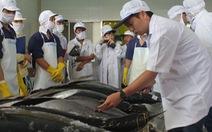 Bình Định xây dựng đội tàu khai thác cá ngừ theo chuỗi