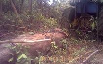 Bí mật ghi hình lâm tặc phá rừng