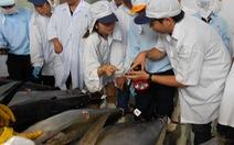 Tiếp tục hỗ trợ ngư dân đánh bắt cá ngừ bán sang Nhật