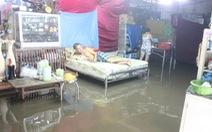 Nước tràn bờ kênh, dân Thanh Đa dầm mình tát nước