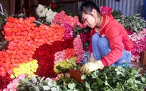 Giáp lễ, hoa hồng Đà Lạt tăng giá mạnh