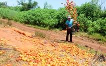 Xót xa cảnh cà chua bị đổ ra đường, cho heo ăn