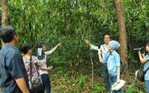 Kỳ thú tiệc rau rừng ở chiến khu Đ