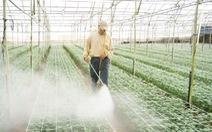 """Nông nghiệp công nghệ cao Đà Lạt:""""Sứt đầu mẻ trán"""" vì giống"""