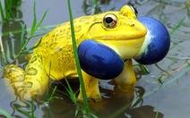 Những sinh vật màu sắc đẹp lạ thường