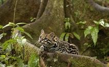 Brazil lập vùng bảo tồn sinh thái rừng Amazon rộng 6.000 km2