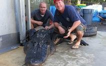 Tay không bắt cá sấu nặng 350kg