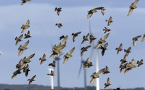 Báo động tình trạng suy giảm số lượng chim ở châu Âu