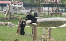Khánh thành khu cứu hộ gấu bán tự nhiên tại Việt Nam