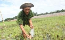 Thời tiết bất thường:Nông dân miền Trung lo lắng