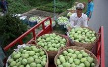 Trái cây Việt lũ lượt... xuất ngoại