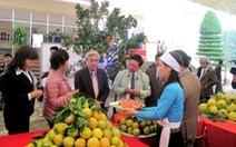 Cam Cao Phong được đăng ký chỉ dẫn địa lý