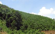 Đức hỗ trợ bảo vệ sinh thái rừng