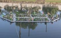 Lắp bè thủy sinh để cải thiện nước sông Tô Lịch