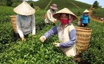 200 tấn trà được thông quan vào Đài Loan