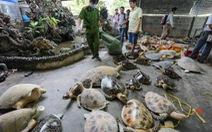 Đề nghị khởi tố đường dây sát hại rùa biển