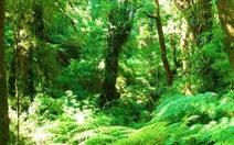 Mỹ Latinh cam kết tái trồng 20 triệu hécta rừng
