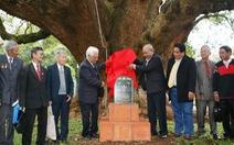 Hai cây long não vua Bảo Đại trồng thành di sản quốc gia