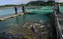 AFP khen mô hình nuôi cá tầm ở Đà Lạt