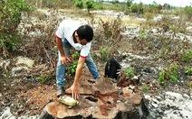 Trưởng công an xã thừa nhận xin gỗ cổ thụ 100 tuổi
