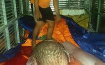 """Thêm cá hô """"khủng"""" 110kg được đưa về TP.HCM"""
