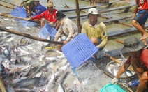Hướng dẫn tính giá thành cá tra nguyên liệu