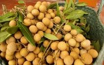 Thêm nhiều loại hoa quả được xuất khẩu