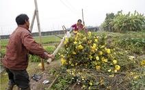 Hoa chất đống đầy đường vì mất giá
