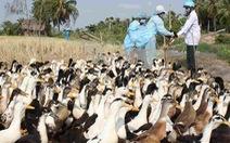 Buôn lậu làm lây lan chủng cúm nguy hiểm sang VN