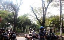 Đốn 116 cây xanh ở cửa ngõ sân bay Tân Sơn Nhất