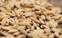 Xuất cấp hạt giống cây trồng cho 5 địa phương
