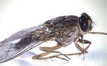 """Điểm tin: Tranh luận quanh""""cuộc chiến"""" con ruồi trong chai nước"""