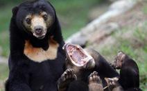 13 nước cam kết dập tắt săn bắn trộm ở châu Á