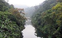 Cho thuê 700ha rừng nghiên cứu khoa học