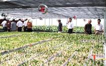 Vùng hoa Hoành Bồ vươn mình nhờ áp dụng công nghệ cao