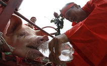 Lễ hội chém lợn: không cấm ngay được